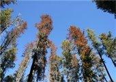 MPB Trees