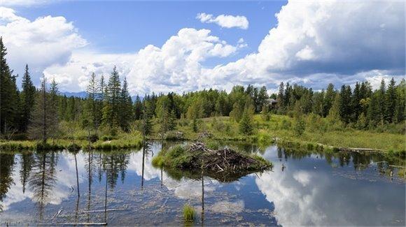 Beaver Lodge and Dam, Facing Mountains